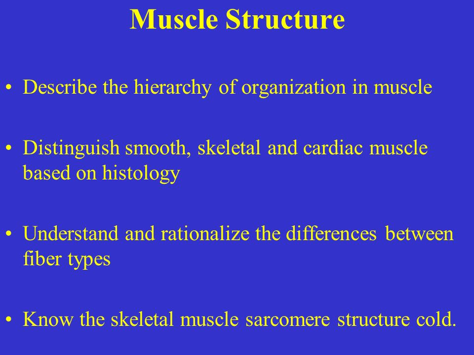 Muscle Structure Describe the hierarchy of organization in muscle Distinguish smooth, skeletal and cardiac muscle based on histology Understand and rationalize the differences between fiber types Know the skeletal muscle sarcomere structure cold.