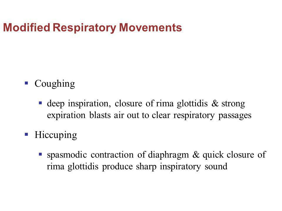 Modified Respiratory Movements Coughing deep inspiration, closure of rima glottidis & strong expiration blasts air out to clear respiratory passages H