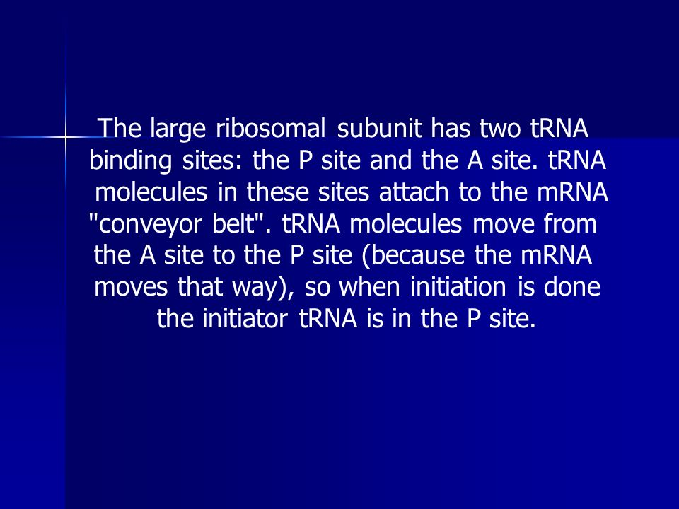 The large ribosomal subunit has two tRNA binding sites: the P site and the A site. tRNA molecules in these sites attach to the mRNA