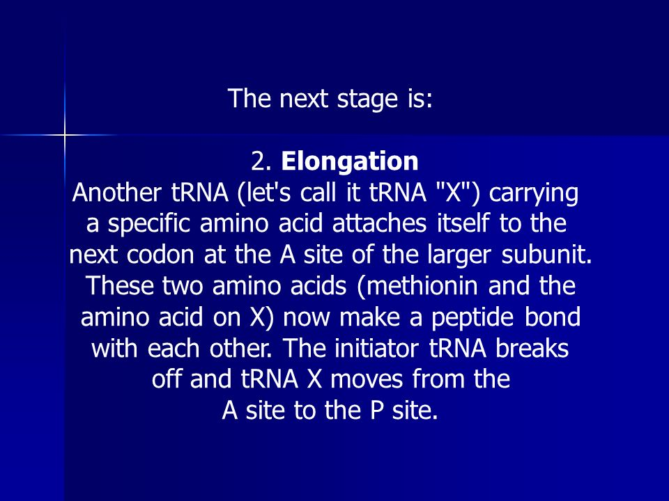 The next stage is: 2. Elongation Another tRNA (let's call it tRNA