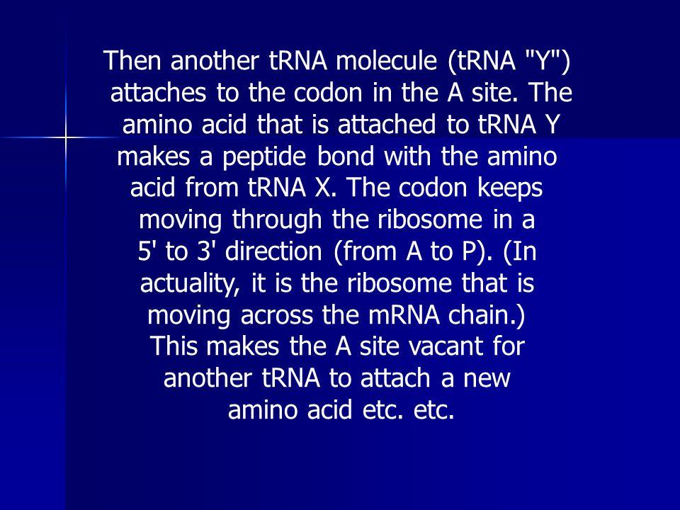 Then another tRNA molecule (tRNA