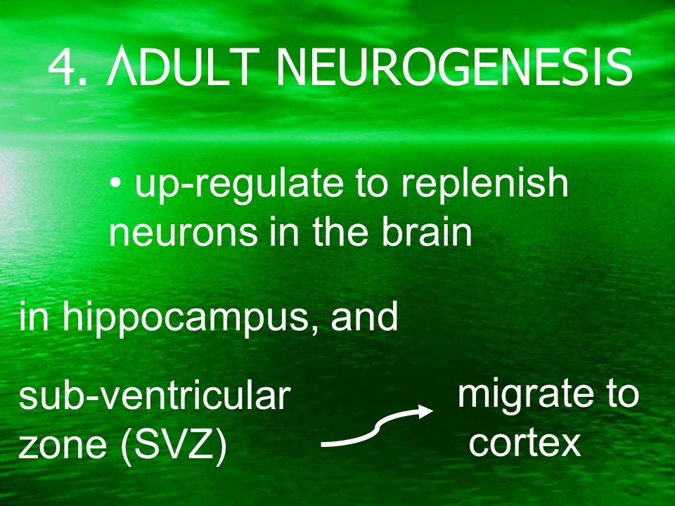 sub-ventricular zone (SVZ) in hippocampus, and migrate to cortex up-regulate to replenish neurons in the brain 4.