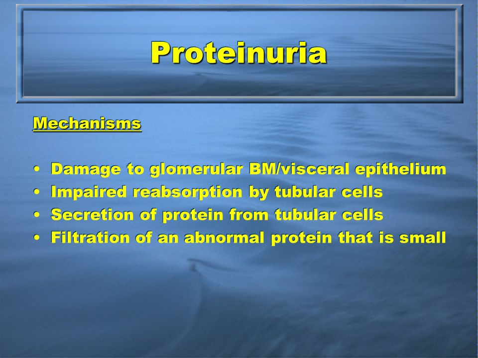 ProteinuriaProteinuria Mechanisms Damage to glomerular BM/visceral epithelium Impaired reabsorption by tubular cells Secretion of protein from tubular cells Filtration of an abnormal protein that is smallMechanisms Damage to glomerular BM/visceral epithelium Impaired reabsorption by tubular cells Secretion of protein from tubular cells Filtration of an abnormal protein that is small