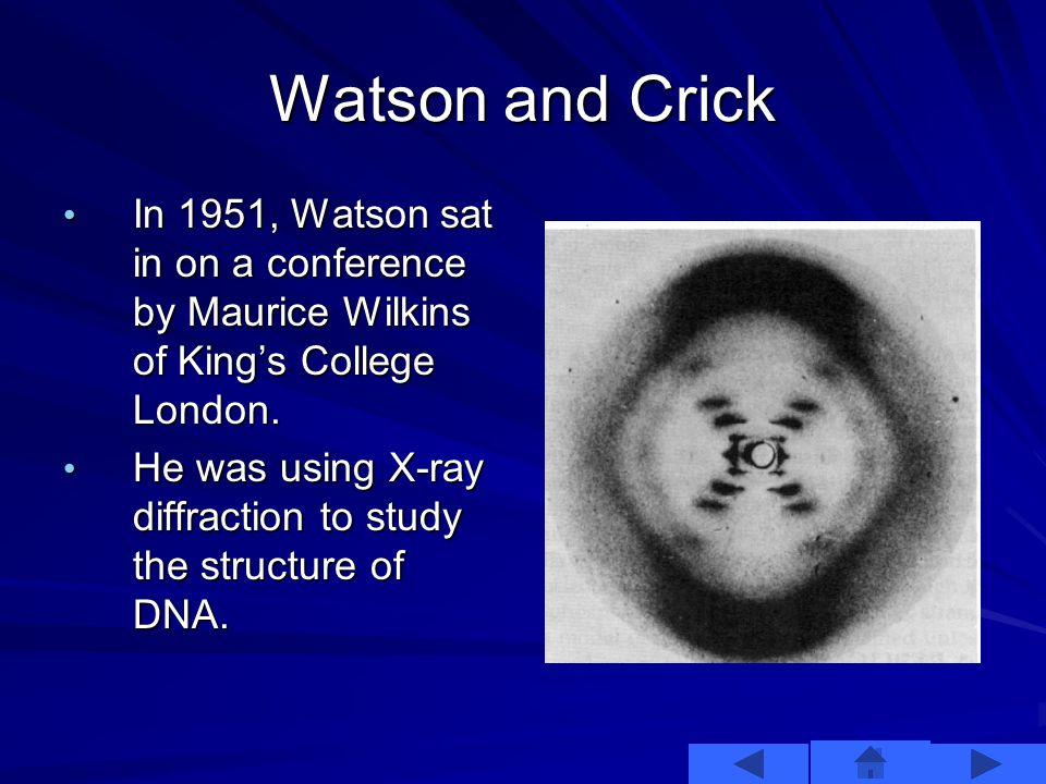 Working to Discovery The framework for Watson and Cricks work was set forth by earlier scientists such as –Frederick Griffith –Oswald Avery –Hershey and Chase