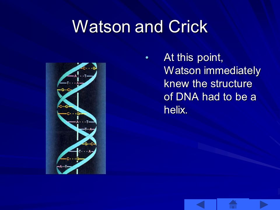 As the two walked away, Wilkins showed Watson a different picture of a B DNA x-ray diffraction. As the two walked away, Wilkins showed Watson a differ