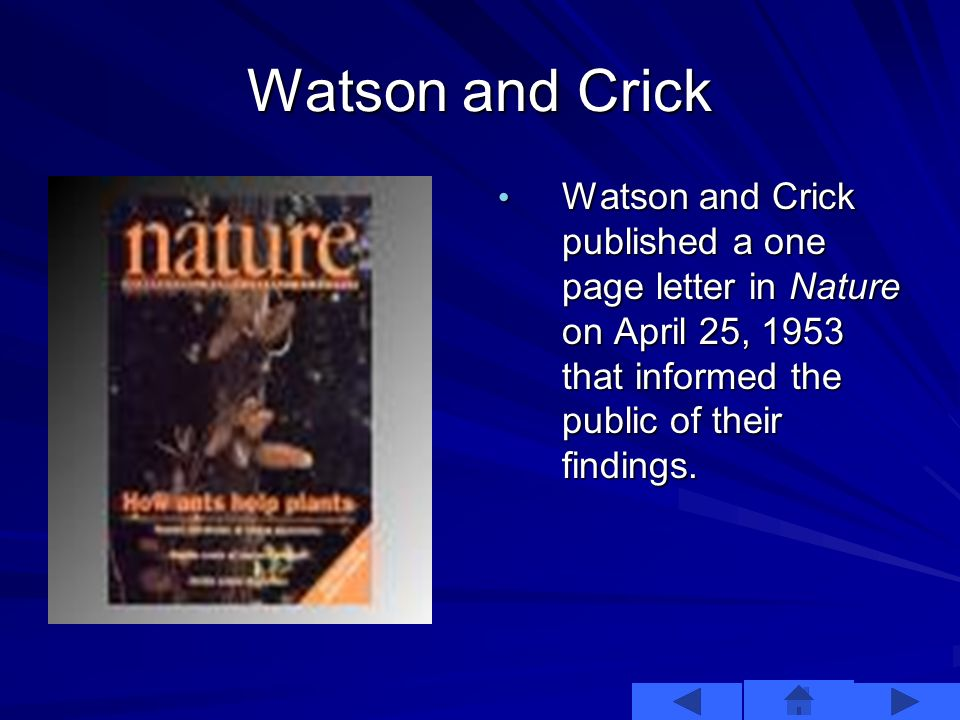 Watson and Crick This is what Watson and Crick discovered.