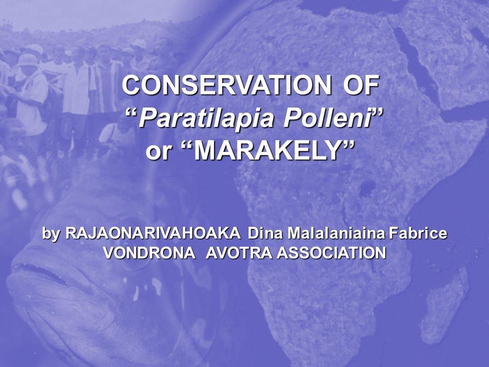 CONSERVATION OF Paratilapia Polleni or MARAKELY Paratilapia Polleni or MARAKELY by RAJAONARIVAHOAKA Dina Malalaniaina Fabrice VONDRONA AVOTRA ASSOCIATION