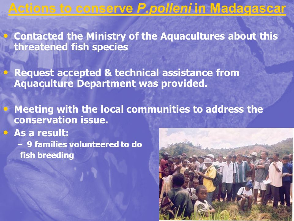Actions to conserve P.polleni in Madagascar Contacted the Ministry of the Aquacultures about this threatened fish species Request accepted & technical assistance from Aquaculture Department was provided.