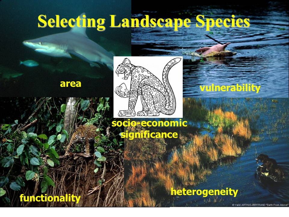 5 criteria for selecting landscape species area vulnerability functionality heterogeneity socio-economic significance Selecting Landscape Species