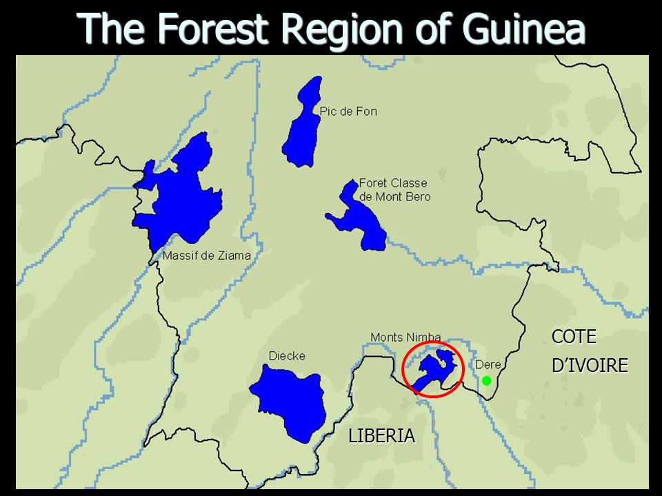 The Forest Region of Guinea LIBERIA COTEDIVOIRE