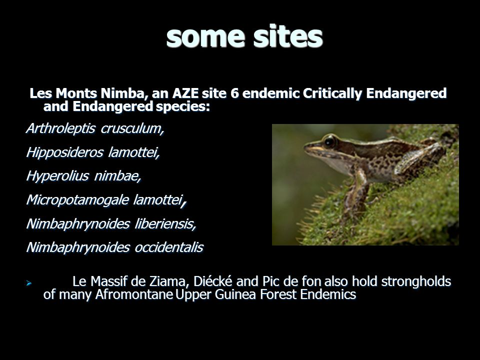 some sites some sites Les Monts Nimba, an AZE site 6 endemic Critically Endangered and Endangered species: Les Monts Nimba, an AZE site 6 endemic Critically Endangered and Endangered species: Arthroleptis crusculum, Hipposideros lamottei, Hyperolius nimbae, Micropotamogale lamottei, Nimbaphrynoides liberiensis, Nimbaphrynoides occidentalis Le Massif de Ziama, Diécké and Pic de fon also hold strongholds of many Afromontane Upper Guinea Forest Endemics Le Massif de Ziama, Diécké and Pic de fon also hold strongholds of many Afromontane Upper Guinea Forest Endemics