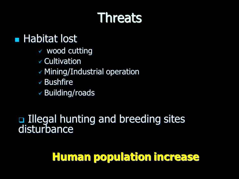 Threats Habitat lost Habitat lost wood cutting wood cutting Cultivation Cultivation Mining/Industrial operation Mining/Industrial operation Bushfire Bushfire Building/roads Building/roads Human population increase Illegal hunting and breeding sites disturbance Illegal hunting and breeding sites disturbance