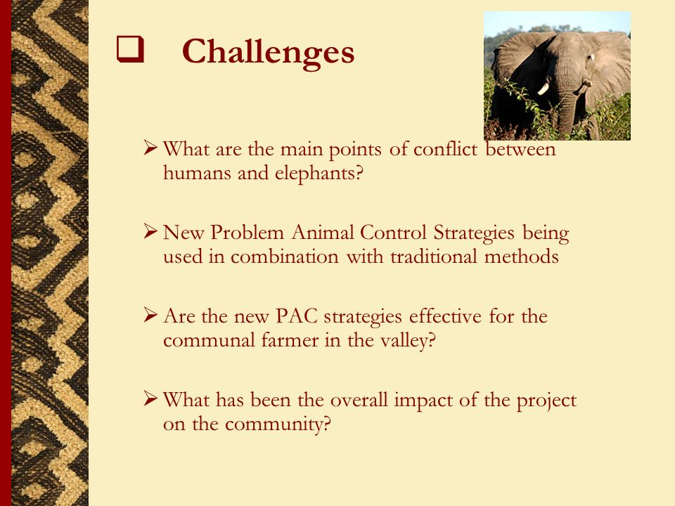 Challenges What are the main points of conflict between humans and elephants.