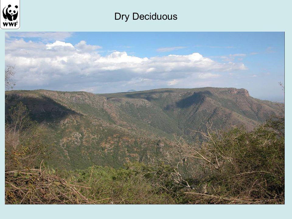 Dry Deciduous