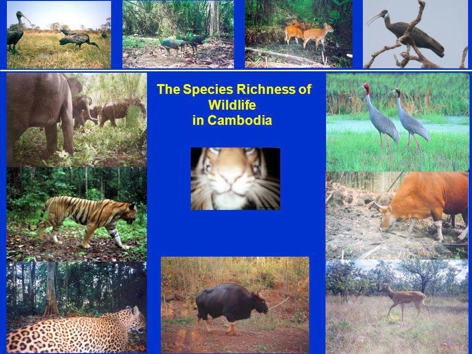 Protected Area in Cambodia *** Covers 47,845Km 2 or about 26.3% of Cambodias land territory