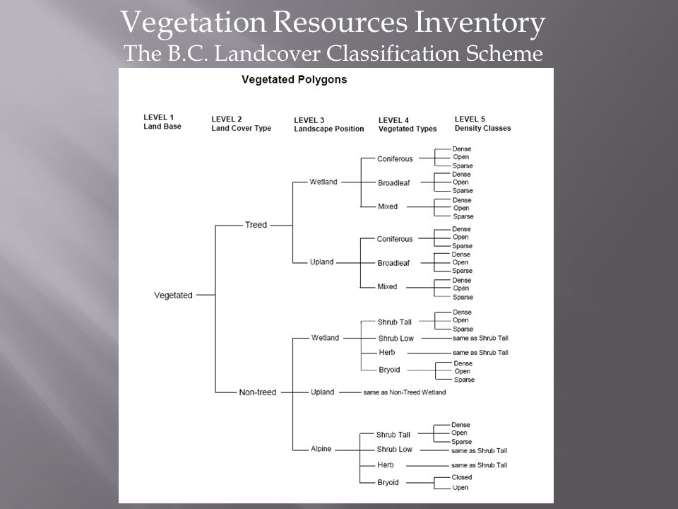 Vegetation Resources Inventory The B.C. Landcover Classification Scheme