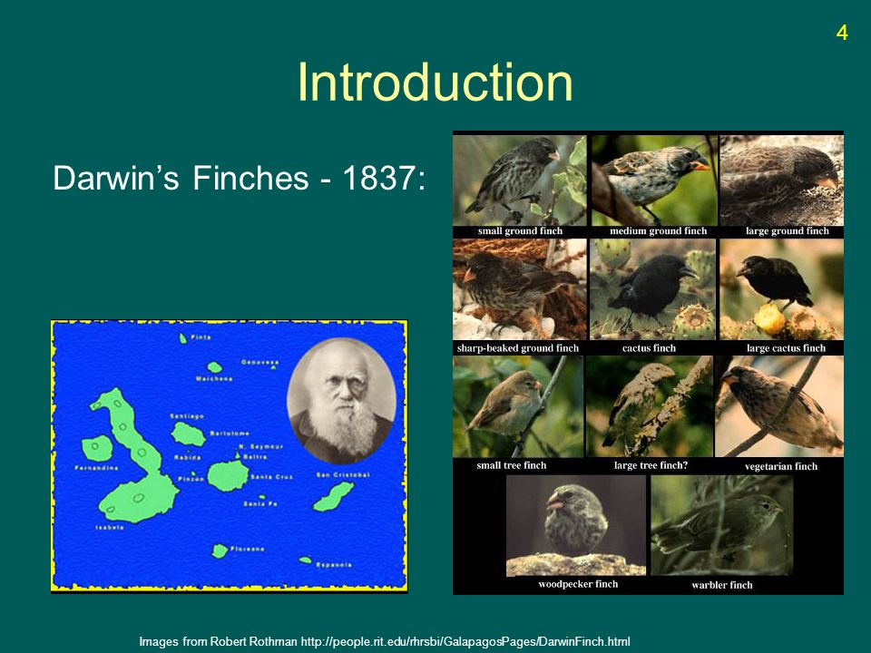 Introduction Darwins Finches - 1837: Images from Robert Rothman http://people.rit.edu/rhrsbi/GalapagosPages/DarwinFinch.html 4
