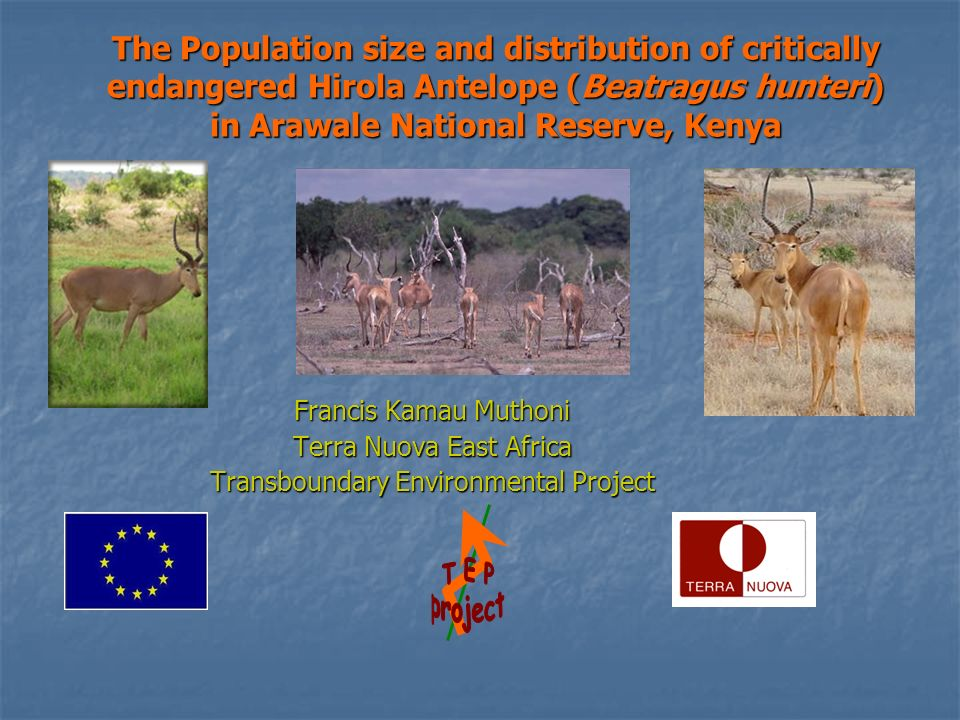 The Population size and distribution of critically endangered Hirola Antelope (Beatragus hunteri) in Arawale National Reserve, Kenya Francis Kamau Muthoni Terra Nuova East Africa Transboundary Environmental Project
