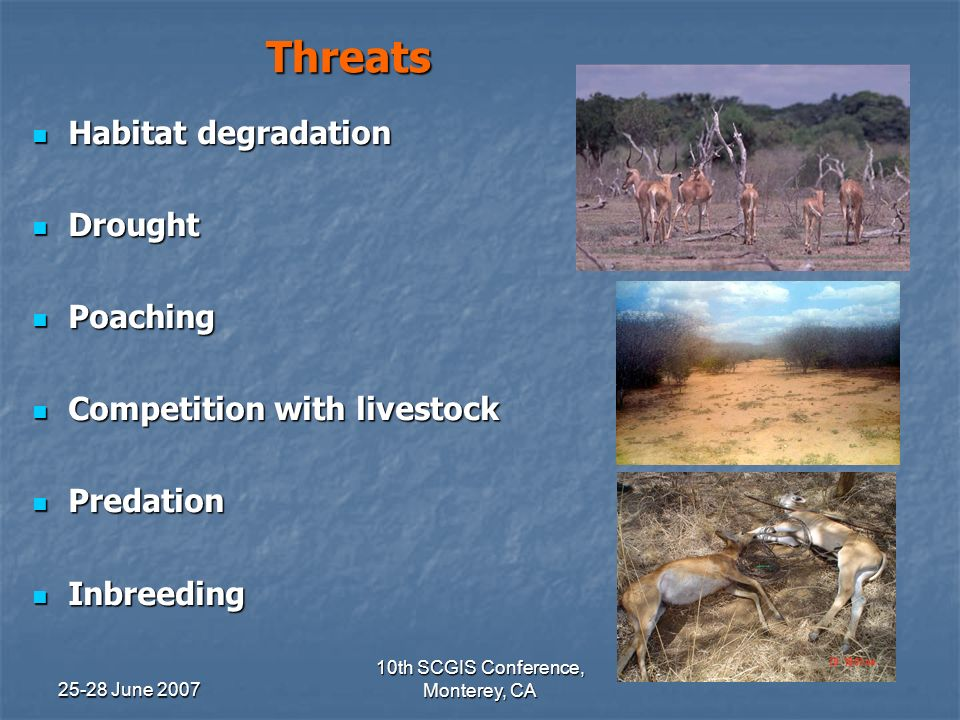 25-28 June 2007 10th SCGIS Conference, Monterey, CA Threats Habitat degradation Habitat degradation Drought Drought Poaching Poaching Competition with livestock Competition with livestock Predation Predation Inbreeding Inbreeding