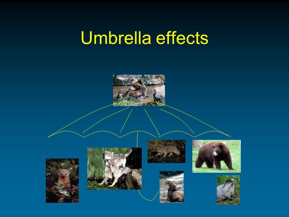 Umbrella effects