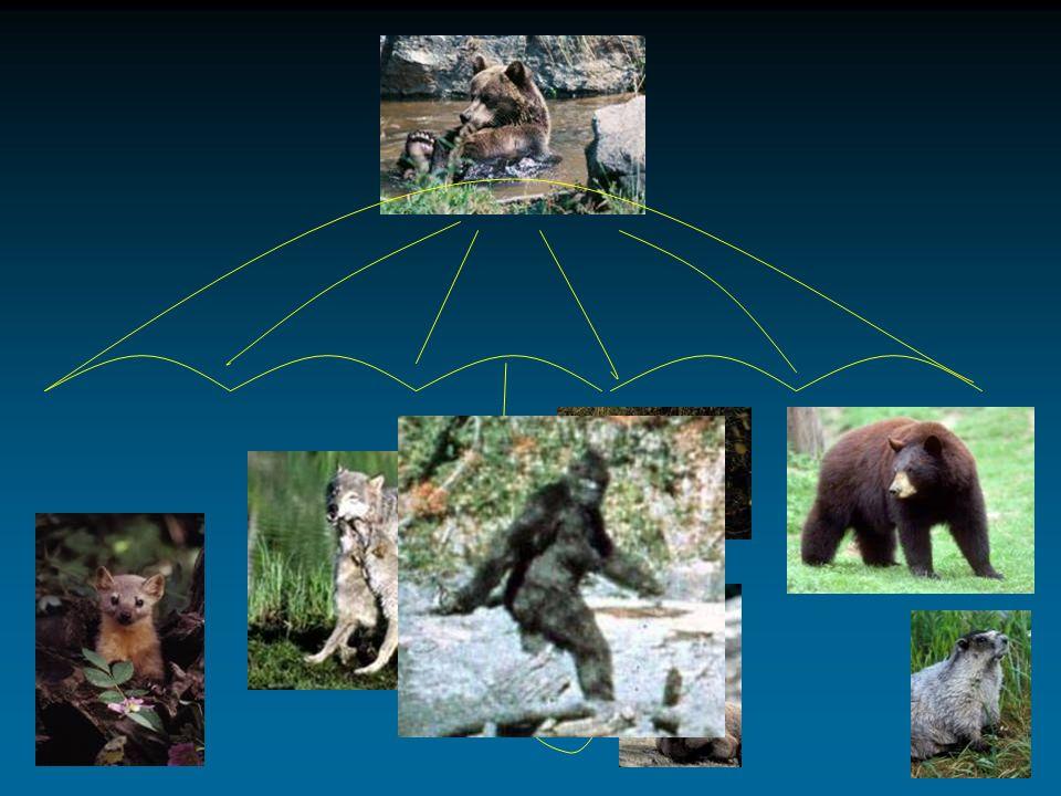 Current Habitat Connectivity