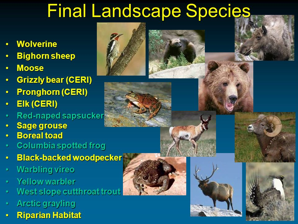 Hierarchy of Conservation Needs Area Sufficient area to support individuals and populations at ecologically functional levels Habitat Availability of appropriate habitat types in sufficient quantity and quality to support individuals and populations Security Security from direct and indirect threats that threaten the survival or natural abundance of individuals or populations Ecological Processes Allow or simulate natural processes to sustain natural habitat heterogeneity Social Acceptance Public values that support conservation