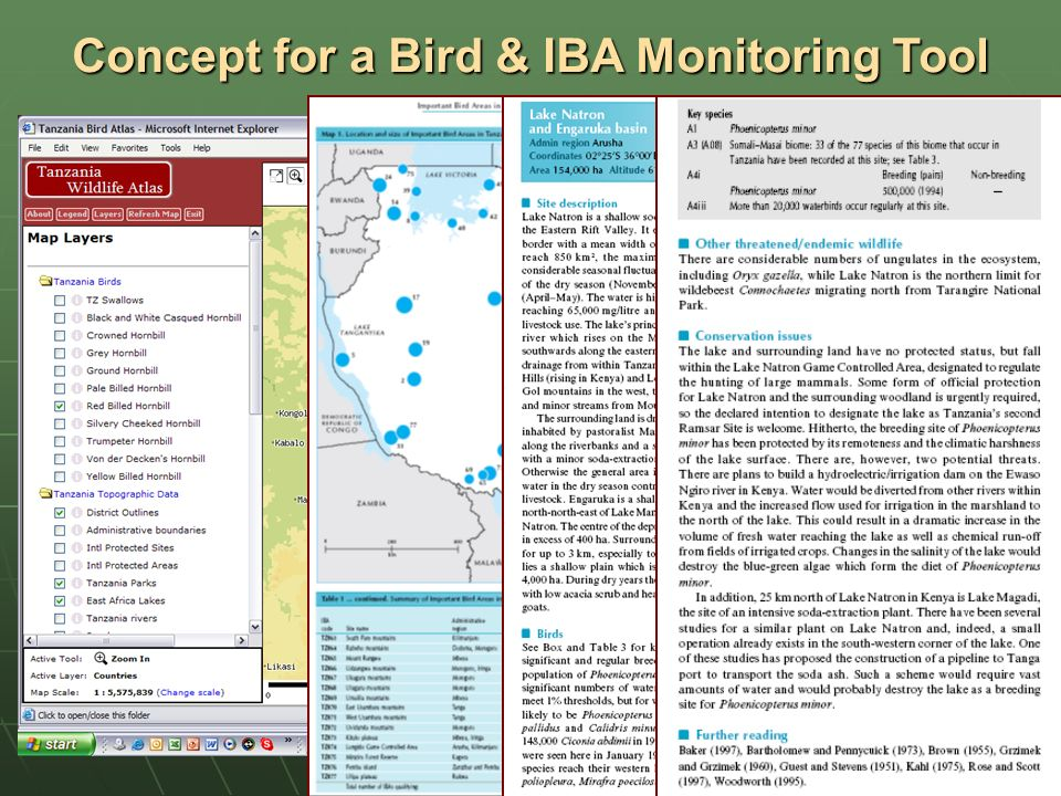 Concept for a Bird & IBA Monitoring Tool