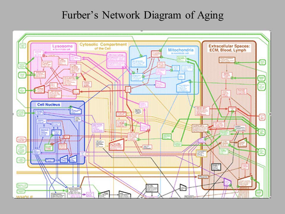 Furbers Network Diagram of Aging