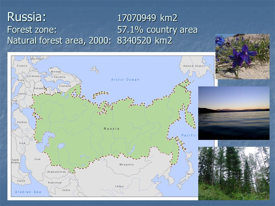Russia: 17070949 km2 Forest zone: 57.1% country area Natural forest area, 2000:8340520 km2