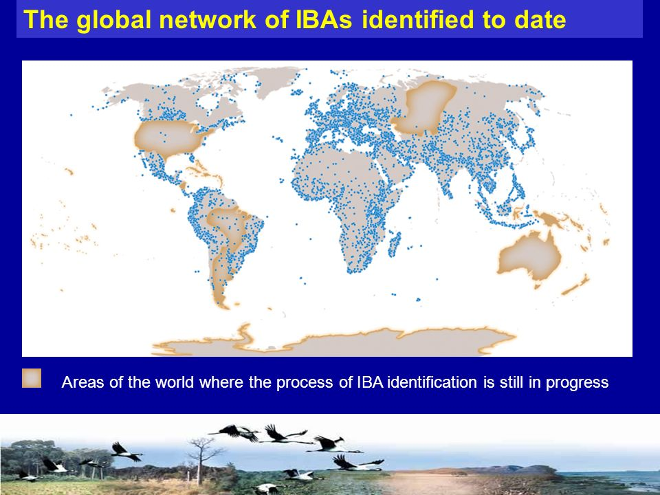 The global network of IBAs identified to date Areas of the world where the process of IBA identification is still in progress
