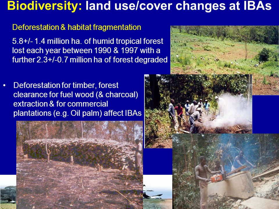 Deforestation for timber, forest clearance for fuel wood (& charcoal) extraction & for commercial plantations (e.g.