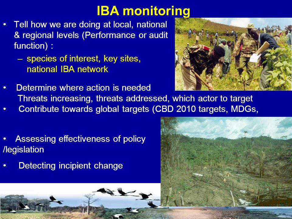 IBA monitoring Tell how we are doing at local, national & regional levels (Performance or audit function) : –species of interest, key sites, national IBA network Determine where action is needed Threats increasing, threats addressed, which actor to target Contribute towards global targets (CBD 2010 targets, MDGs, Assessing effectiveness of policy /legislation Detecting incipient change