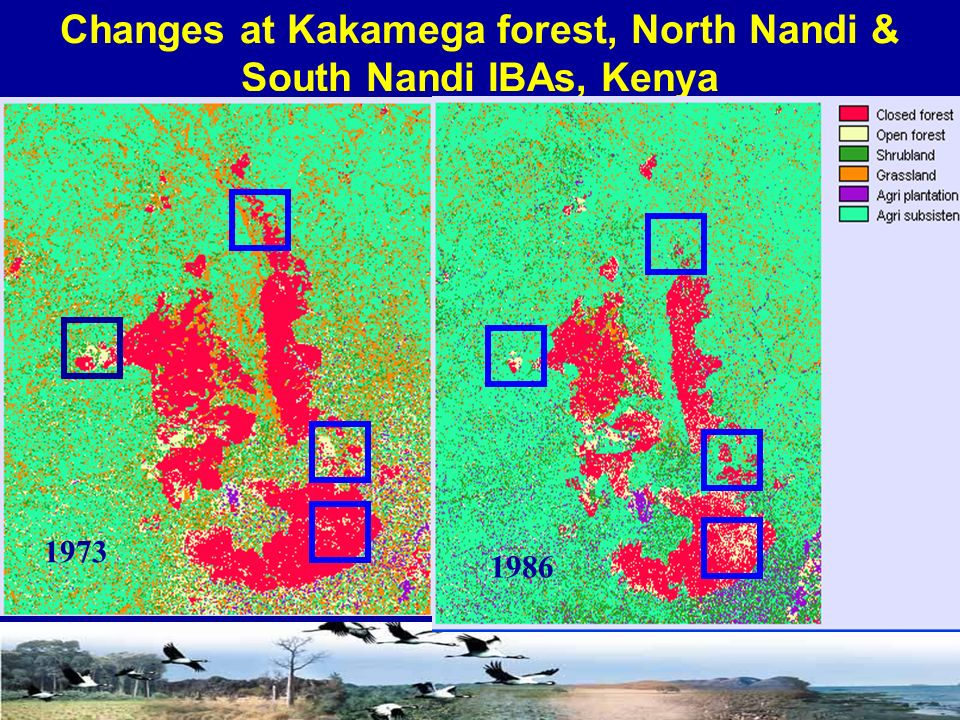 Changes at Kakamega forest, North Nandi & South Nandi IBAs, Kenya 1973 1986