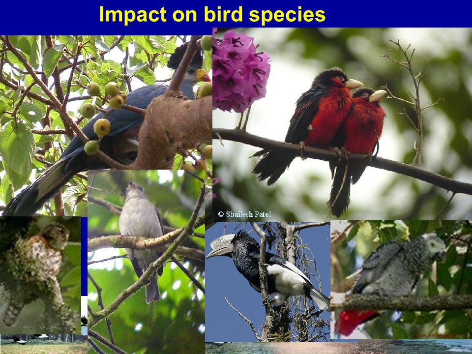 Impact on bird species