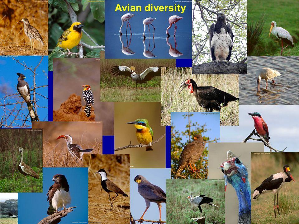 Avian diversity