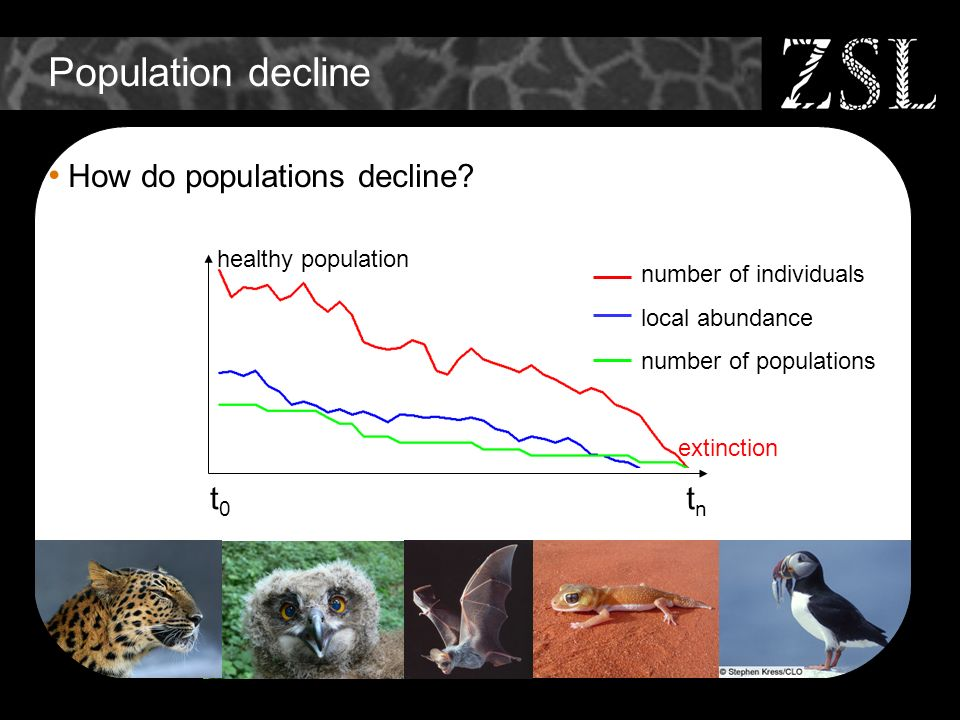 Population decline How do populations decline? t0t0 tntn extinction healthy population number of individuals local abundance number of populations