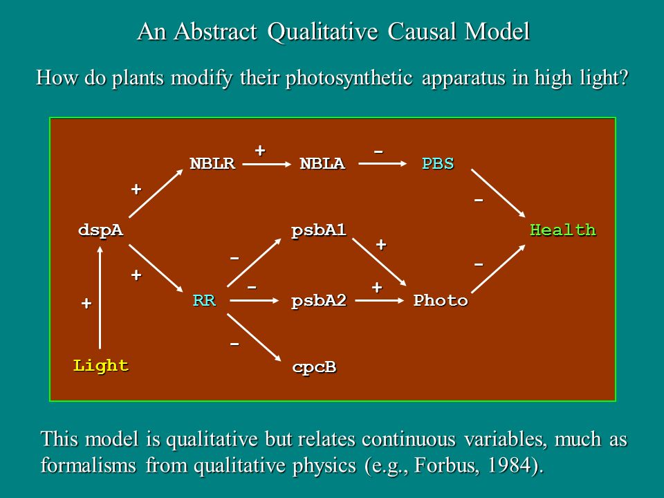 How do plants modify their photosynthetic apparatus in high light.