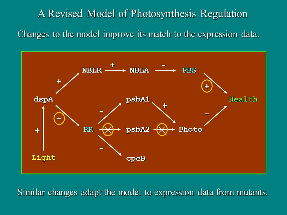 Changes to the model improve its match to the expression data.