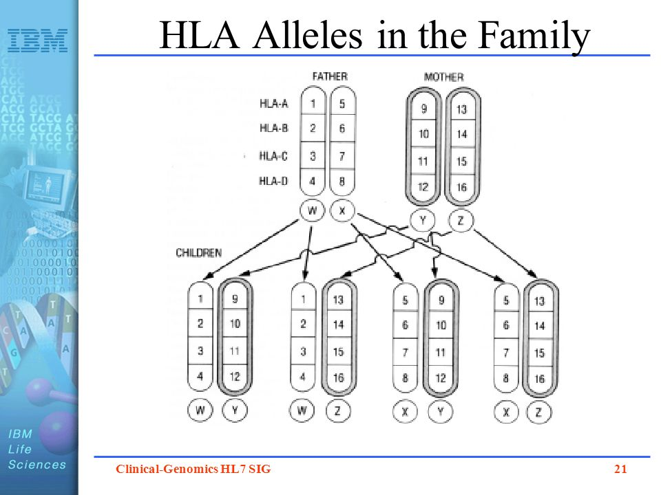 Clinical-Genomics HL7 SIG 21 HLA Alleles in the Family