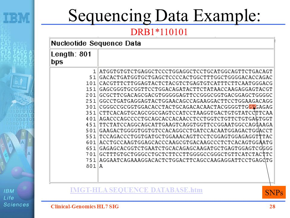 Clinical-Genomics HL7 SIG 28 Sequencing Data Example: IMGT-HLA SEQUENCE DATABASE.htm DRB1*110101 SNPs