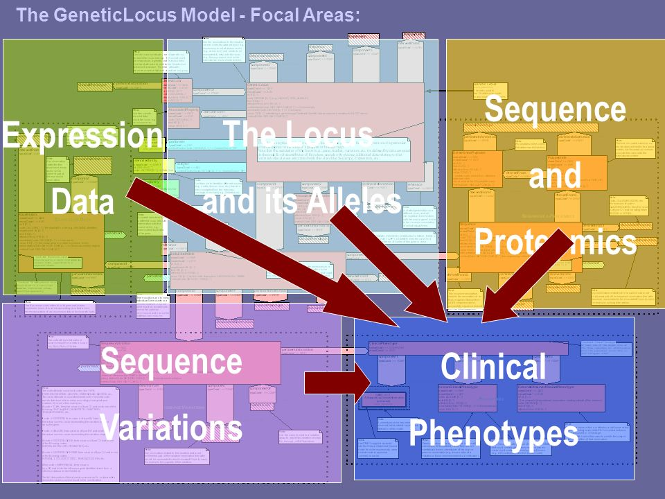 6 The Locus and its Alleles Sequence Variations Expression Data Sequence and Proteomics Clinical Phenotypes The GeneticLocus Model - Focal Areas: