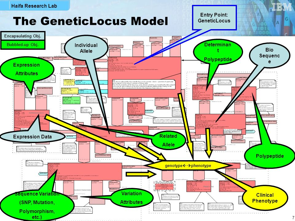 Haifa Research Lab 8 The GeneticVariation Model Geneti c Loci Geneti c Locus Individual Allele Sequenc e Variation Sequence (observed or reference) Point to CDA Documents participants Associated data (vocab.