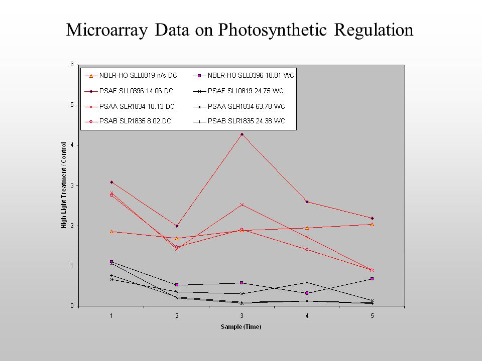 Microarray Data on Photosynthetic Regulation