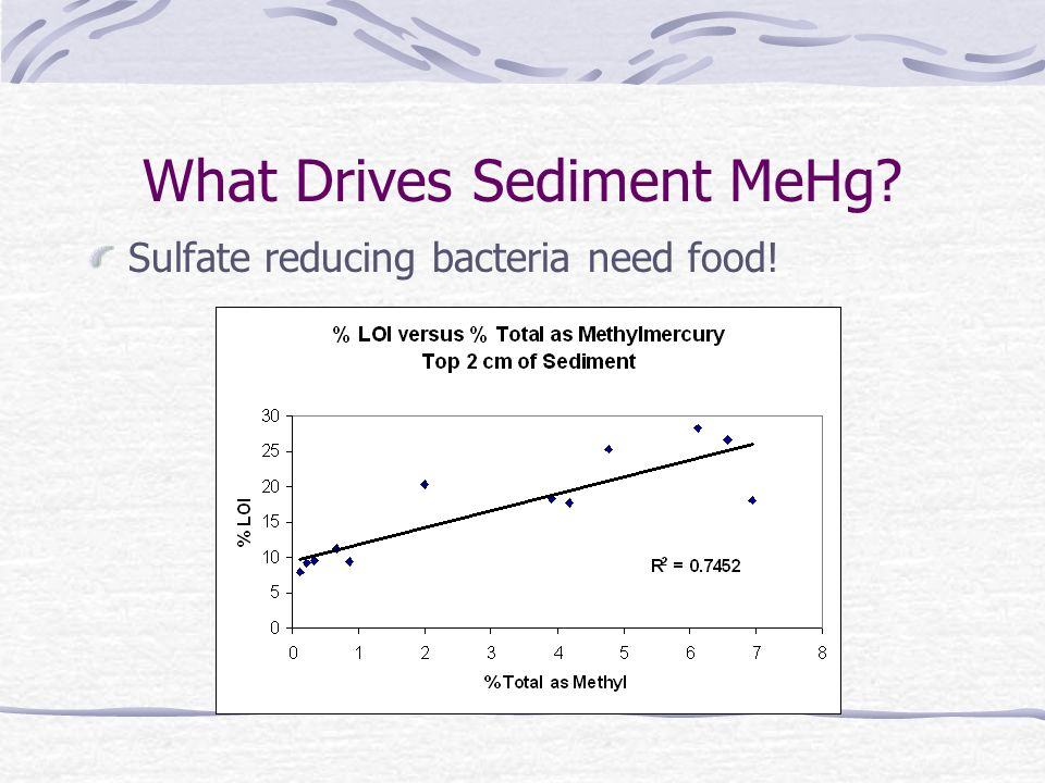 What Drives Sediment MeHg Sulfate reducing bacteria need food!