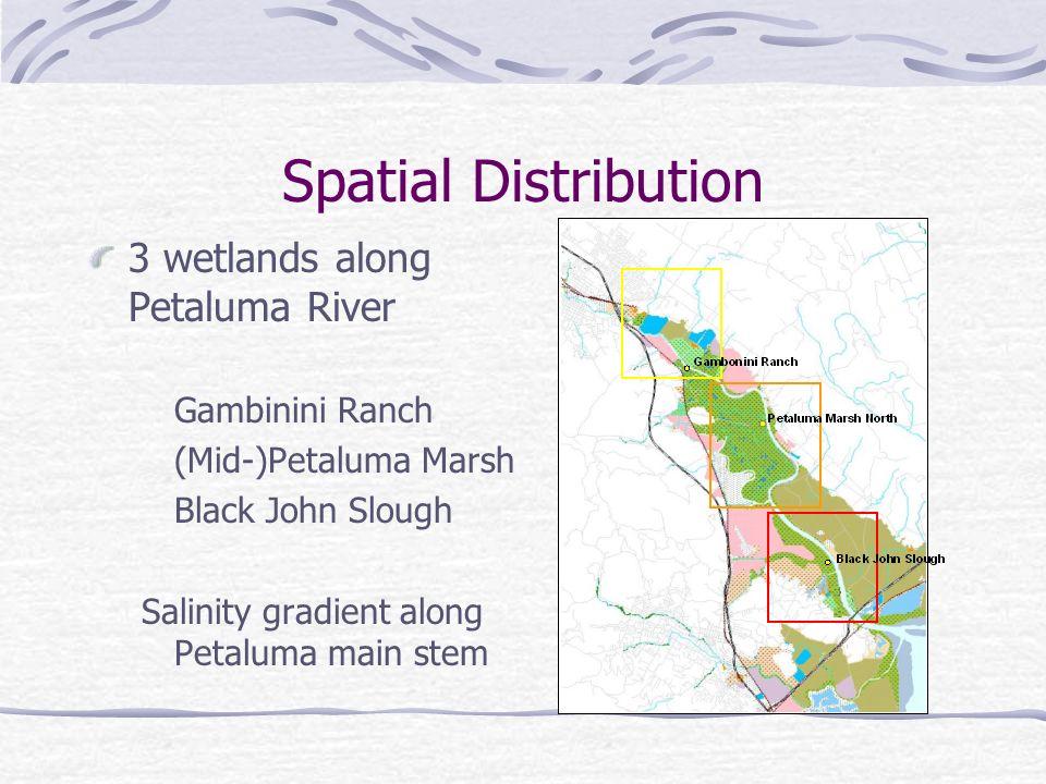 Spatial Distribution 3 wetlands along Petaluma River Gambinini Ranch (Mid-)Petaluma Marsh Black John Slough Salinity gradient along Petaluma main stem