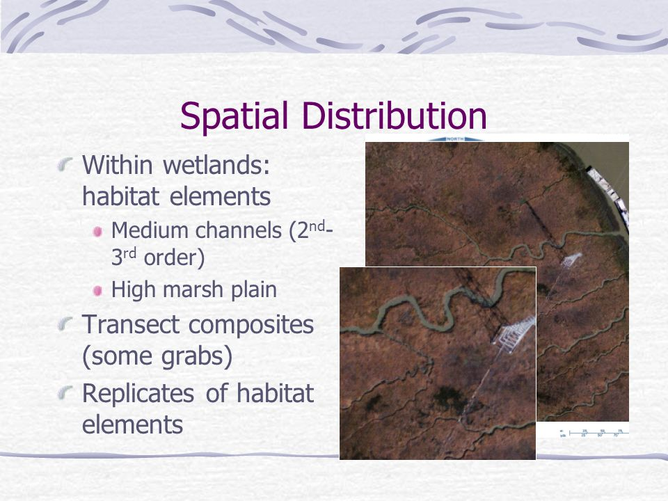 Spatial Distribution Within wetlands: habitat elements Medium channels (2 nd - 3 rd order) High marsh plain Transect composites (some grabs) Replicates of habitat elements