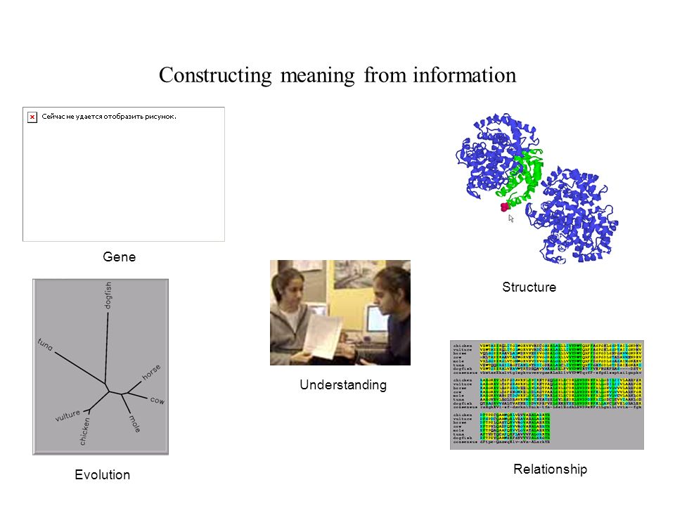 Gene Structure Relationship Understanding Evolution Constructing meaning from information