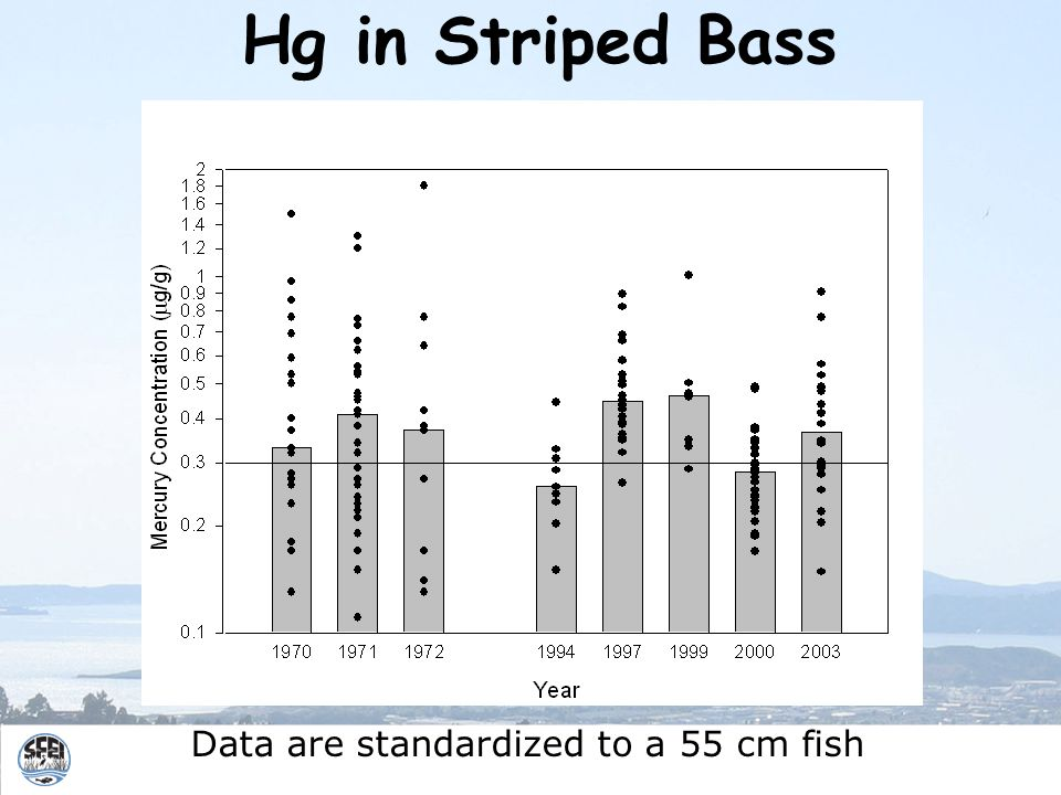 Data are standardized to a 55 cm fish Hg in Striped Bass