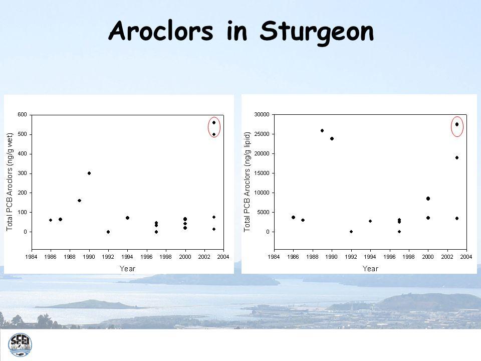 Aroclors in Sturgeon