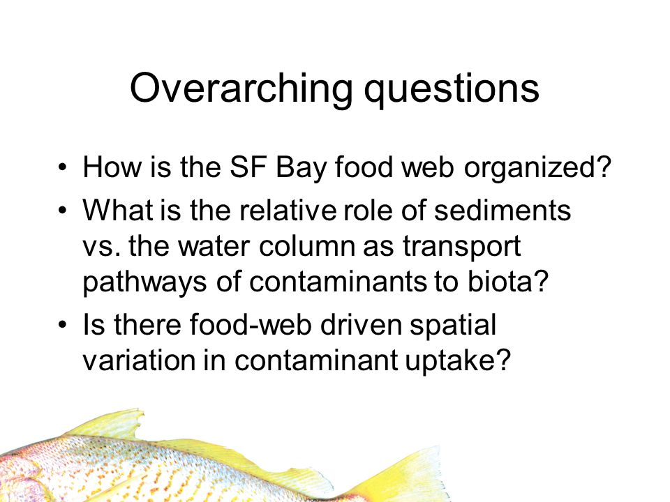 Overarching questions How is the SF Bay food web organized? What is the relative role of sediments vs. the water column as transport pathways of conta